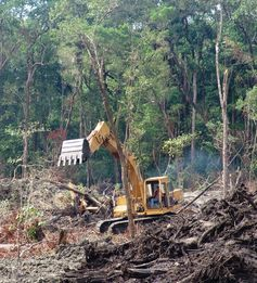Land Clearing and Excavating in Palm Coast